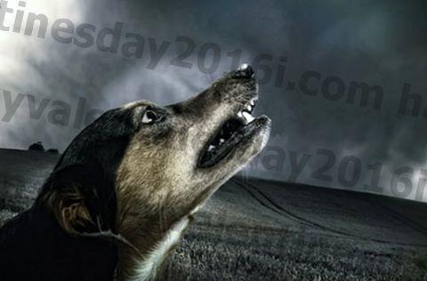 7 bahan alami untuk membantu menenangkan anjing Anda saat hujan badai