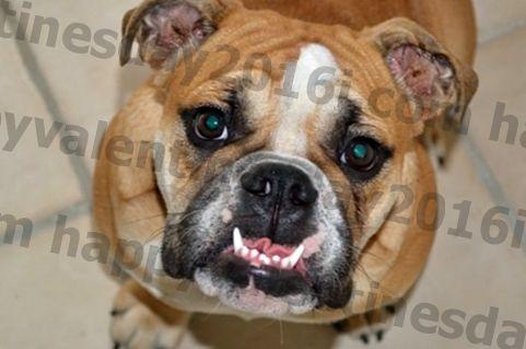 5 tips untuk anjing yang benci penjagaan gigi anjing