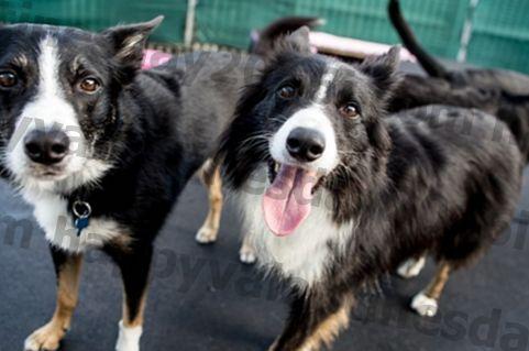 Bepergian Dengan Atau Memelihara Anjing Anda? Suplemen Murah Ini Dapat Mencegah Yucky Poops