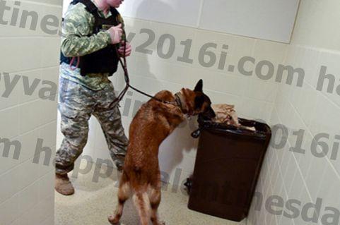 9 Модерне употребе за војне псе