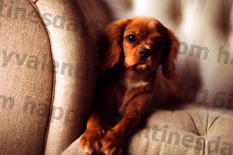 8 pasem psov, ki so znane po nežnem duhu