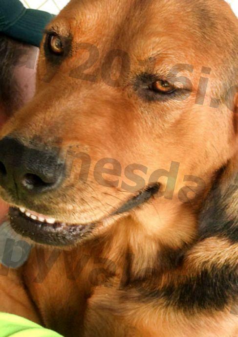 Дарения за храна помагат на изоставеното куче за приюти да се осинови