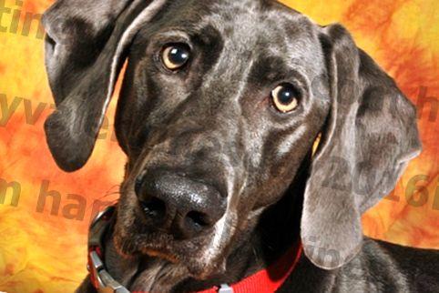Har din hund konstante øreinfektioner? Dette Powerhouse-næringsstof kan hjælpe