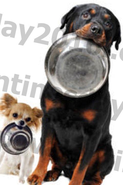 Adakah Anda Pasti Anda Memakan Anjing Anda Jumlah Yang Benar?