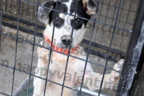 シェアしてください!ローレンス郡動物保護施設から救出された犬のための特別無料養子縁組イベント