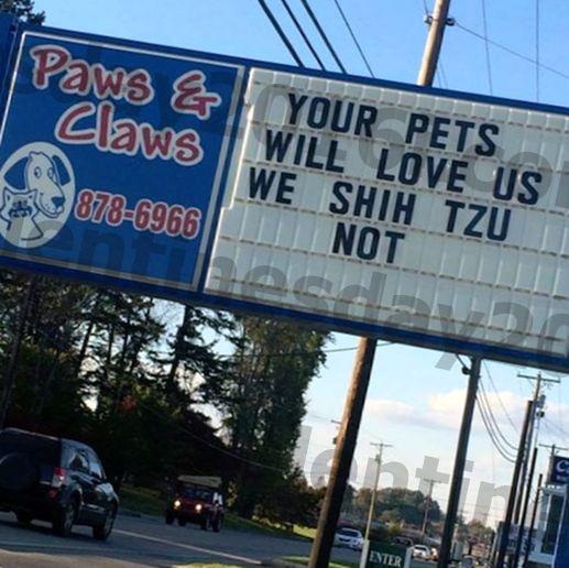 mislite da veterinari nemaju smisla za humor? pogledajte ovih 13 znakova