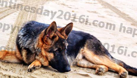 Memilih Suplemen Gabungan Terbaik / Glukosamin untuk Anjing - 6 Hal yang Harus Anda Ketahui