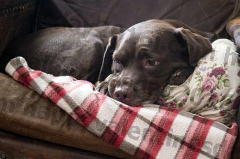 Suatu Kondisi yang Menyulitkan Membuat Anjing-Anjing Malu Saat Cuaca Ternyata Lebih Dingin