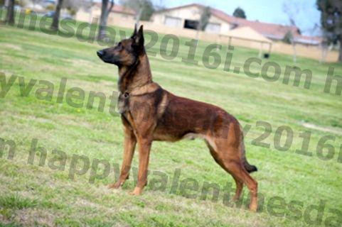 Материали за теглото - сериозните рискове от кучешко затлъстяване