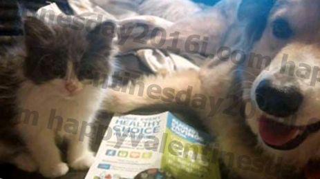 O proprietário do animal de estimação afixa o anúncio para o cão em Craigslist antes que se mova