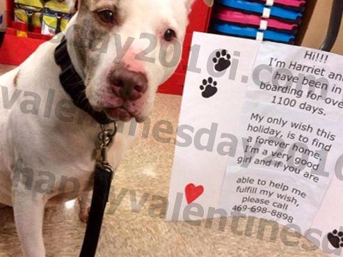 Zataknjen v zavetišču že več kot 1000 dni, ta pes hudo želi ljubeč dom za počitnice