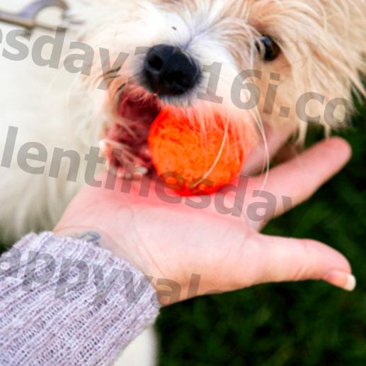 Изузетно критична ствар коју би сви родитељи паса требали учинити са играчкама свог штенета