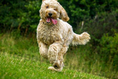 Jalutuskäik, Jog, Jooks: Mis möödub minu koera treenimisest?