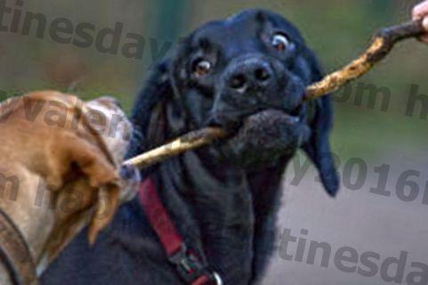 İkinci Bir Köpek Almalı mıyım?